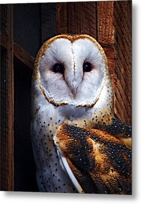 Barn Owl  Metal Print by Anthony Jones