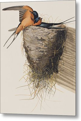 Barn Swallow Metal Print by John James Audubon