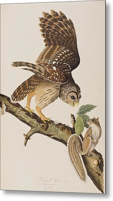 Barred Owl Metal Print by John James Audubon