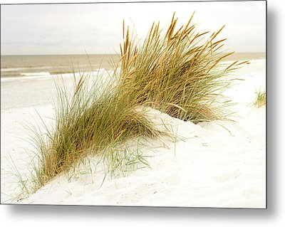 Metal Print featuring the photograph Beach Grass by Hannes Cmarits