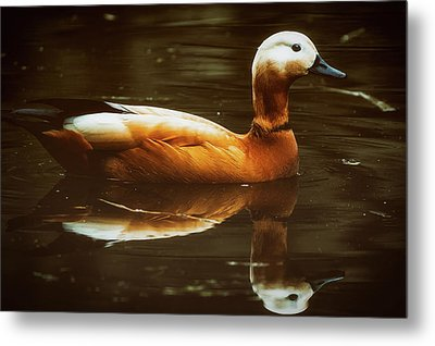 Metal Print featuring the photograph Beautiful Rust Goose by The 3 Cats