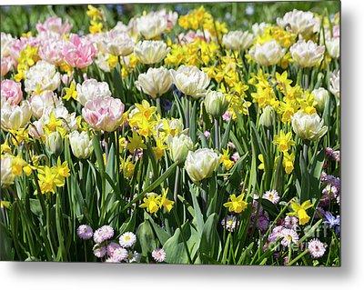 Beautiful Spring Flowers Metal Print by Louise Heusinkveld
