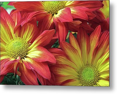 Metal Print featuring the photograph Beautiful Trio by Allen Beatty