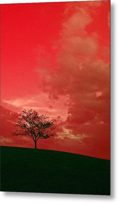 Beauty Stands Against The Terrible Sky Metal Print by Dawn Richerson