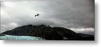 Metal Print featuring the photograph Bird Over Glacier - Alaska by Madeline Ellis