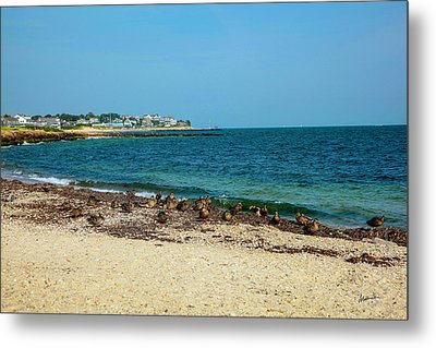 Metal Print featuring the photograph Birds On The Beach by Madeline Ellis