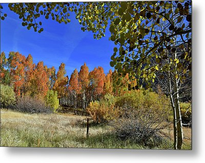Metal Print featuring the photograph Bishop Creek by Dung Ma