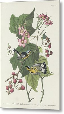 Black And Yellow Warbler Metal Print by Anton Oreshkin