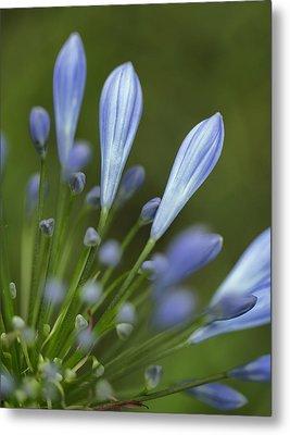 Blue Flowers Metal Print by Nailia Schwarz
