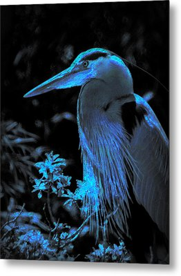 Metal Print featuring the photograph Blue Heron by Lori Seaman