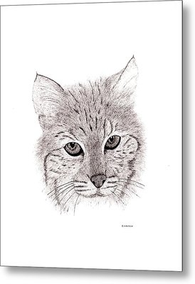 Bobcat Metal Print by Ed Einboden