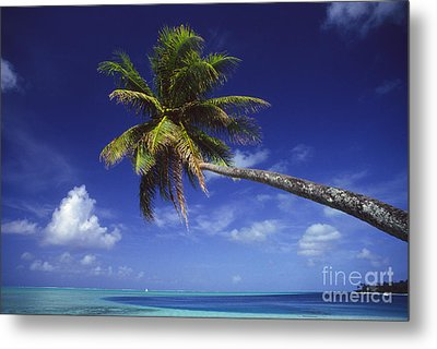 Bora Bora, Palm Tree Metal Print by Ron Dahlquist - Printscapes