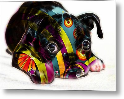Boston Terrier Puppy Metal Print by Marvin Blaine