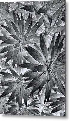 Metal Print featuring the photograph Botanical by Wayne Sherriff