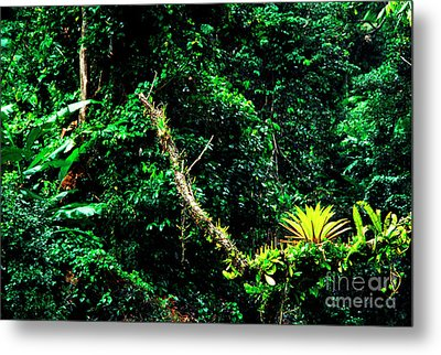 Bromeliads El Yunque National Forest Metal Print by Thomas R Fletcher