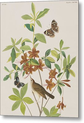 Brown Headed Worm Eating Warbler Metal Print by John James Audubon