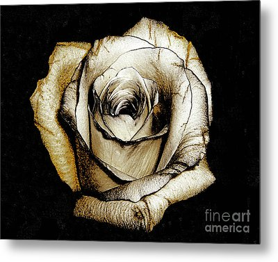 Metal Print featuring the photograph Brown Rose - Digital Painting by Merton Allen