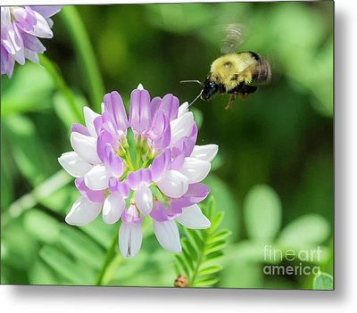 Bumble Bee Pollinating A Flower Metal Print by Ricky L Jones