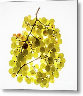Bunch Of White Grapes Metal Print by Bernard Jaubert