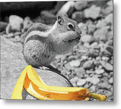 Burp... What Banana ?... Metal Print by Donna Kennedy