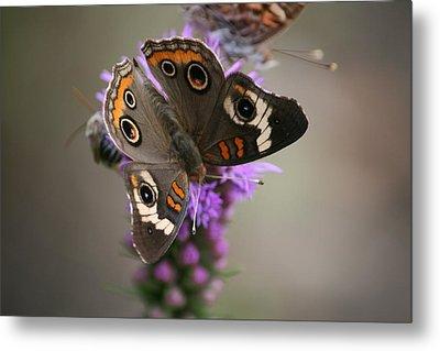 Buckeye Butterfly Metal Print by Cathy Harper