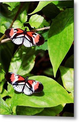 Butterflies Metal Print by Sandy Taylor
