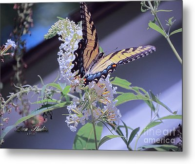 Butterfly Bush ,butterfly Included Metal Print by Melissa Messick