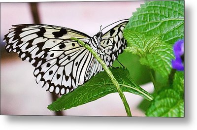 Paper Kite Butterfly No. 1 Metal Print
