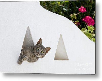 Cat In A Wall Metal Print