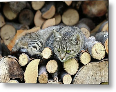 Metal Print featuring the photograph Cat Resting On A Heap Of Logs by Michal Boubin