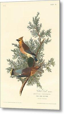 Cedar Bird Metal Print