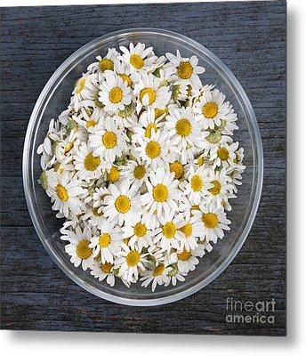 Chamomile Flowers In Bowl Metal Print