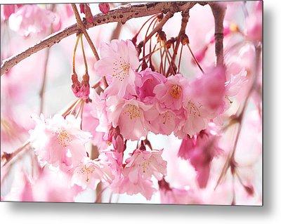 Cherry Blossoms Metal Print by Trina Ansel