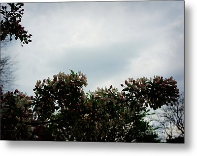 Cherry Tree Metal Print by Celestial Images