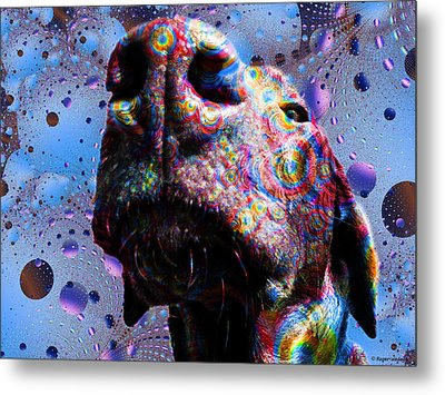 Chocolate Lab Nose Metal Print by Roger Wedegis