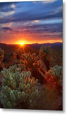 Cholla Sunset  Metal Print