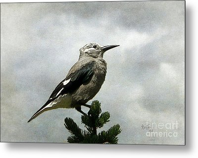 Clarks Nutcracker Metal Print by Krista-