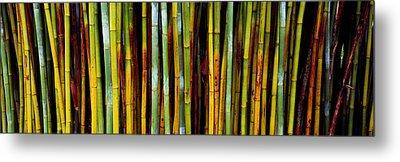 Close-up Of Bamboos, Kanapaha Botanical Metal Print