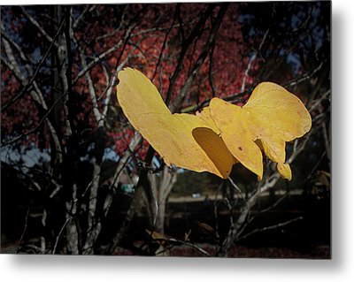 Colors Of Fall Metal Print by Joseph G Holland