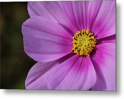 Metal Print featuring the photograph Cosmos by Elvira Butler