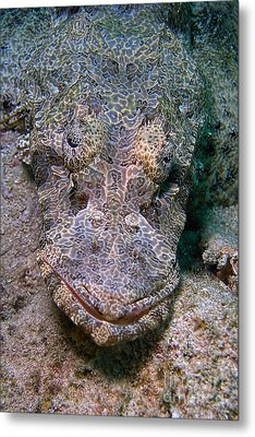 Crocodile Fish Metal Print