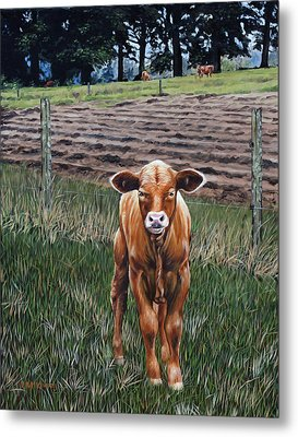 Curious Calf Metal Print