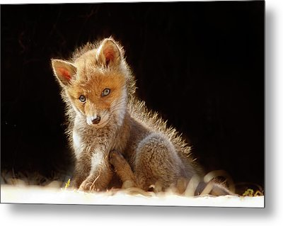 Cute Baby Fox Metal Print by Roeselien Raimond