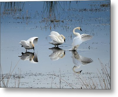 Dance Of The Trumpeter #1a Metal Print