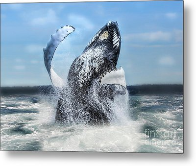 Dances With Whales Metal Print by Nancy Dempsey