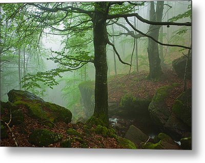 Dark Forest Metal Print by Evgeni Dinev