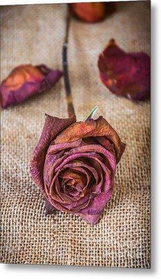 Dead Rose Metal Print by Carlos Caetano
