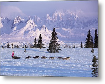 Deedee Jonrowe Mushes Her Dog Team Metal Print by Jeff Schultz