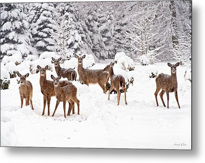 Metal Print featuring the photograph Deer In The Snow by Angel Cher