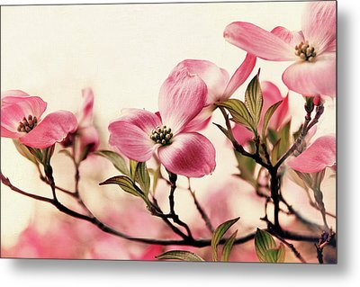 Metal Print featuring the photograph Delicate Dogwood by Jessica Jenney